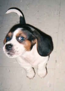Madeline as an extremely adorable little puppy